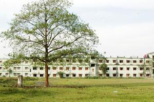 GC - Primary